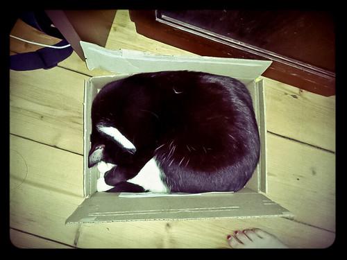 Marie in da Box