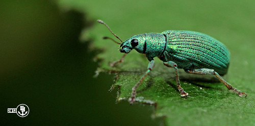 green by Steve Settanta