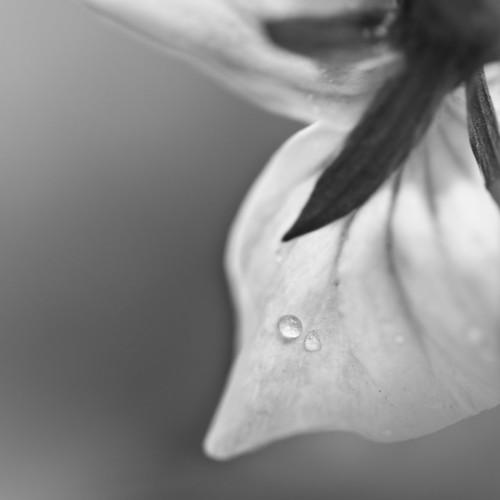 b/w flower 3