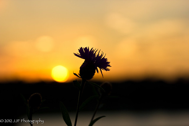 2012_Jul_05_Harkness Park Sunset_039