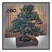 Bonsai - Banksia integrifolia (Coast Banksia) - Stylised version