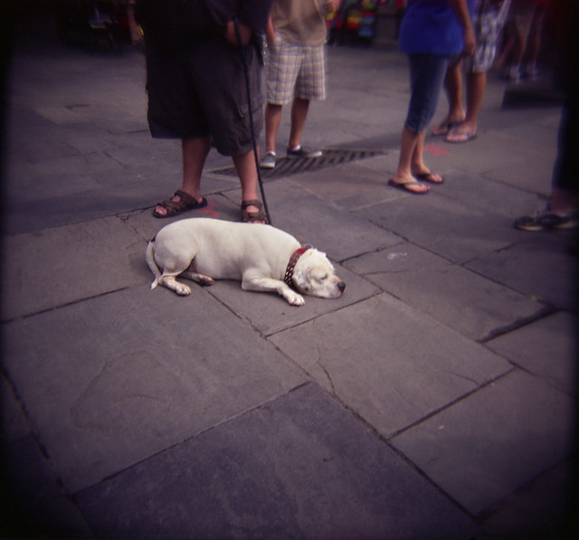 Dog in New Orleans