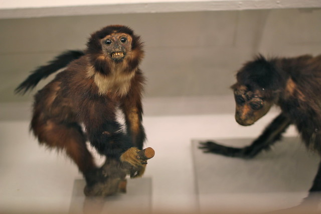 Eee! Terrifying monkeys. I love them.