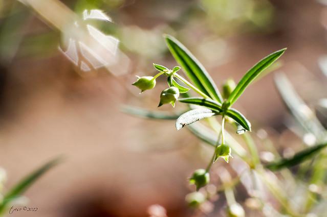 Macro grass flower