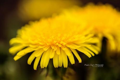 20120504-328C0839-WM by {Pamela Zmija Photography}