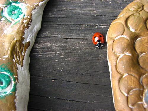 ladybird between owls