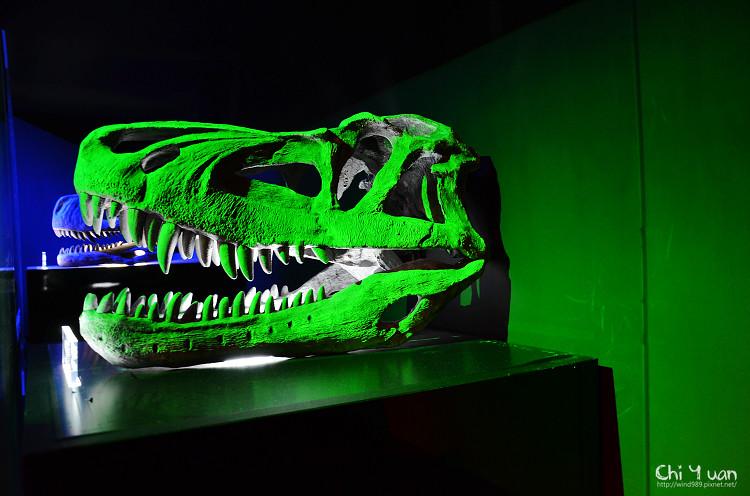 地球最古老的恐龍展18.jpg