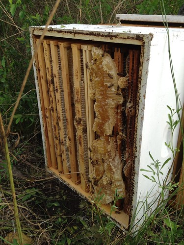 Overturned bee box 1