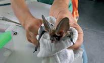 Proyecto Biodiversidad de murciélagos