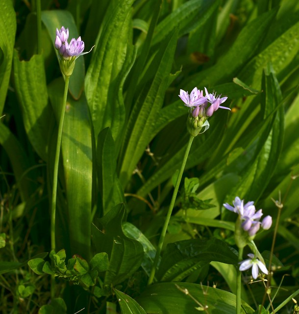 Other Purple Flowers