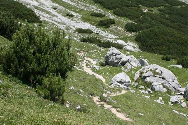 Zur Zugspitze