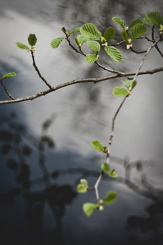 branch over the river