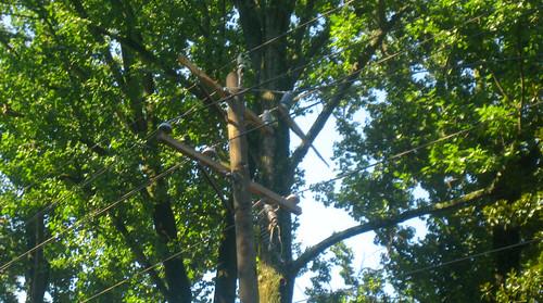 20120630 0848 - storm damage while yardsaleing - telephone pole shard - IMG_4526