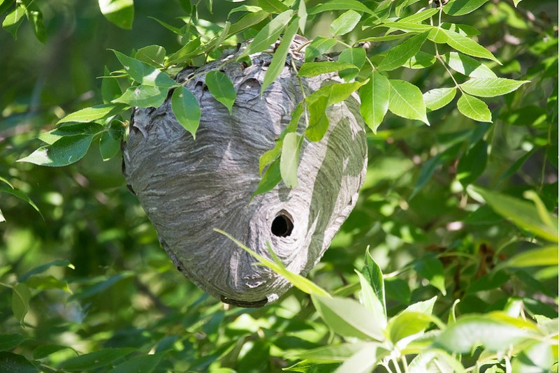 _DSC4046 Nest