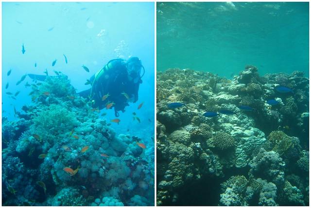 Agyptenfisch3