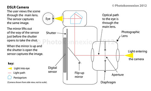 The DSLR uses through the lens (TTL) viewing.