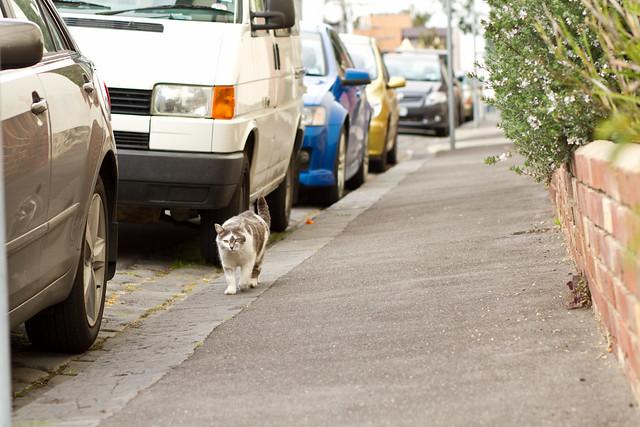 Cat I met