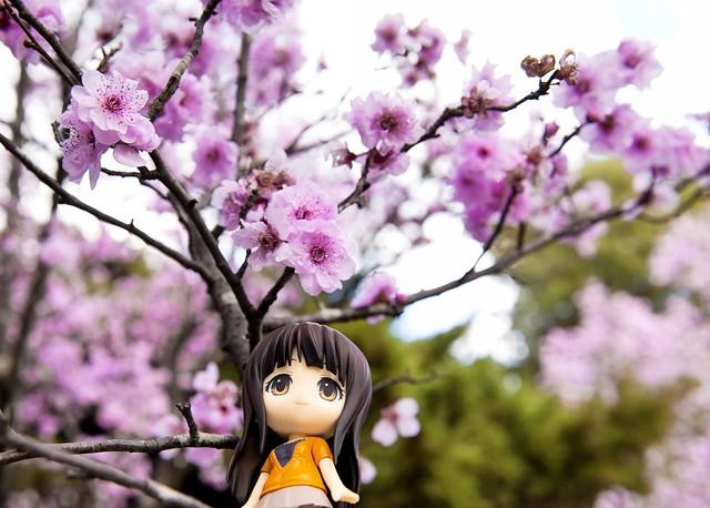 Sakura Festival by darkm4g