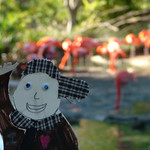 Flat Stanley at the San Diego Zoo