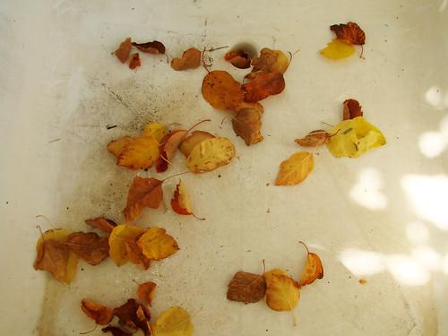 leafsink