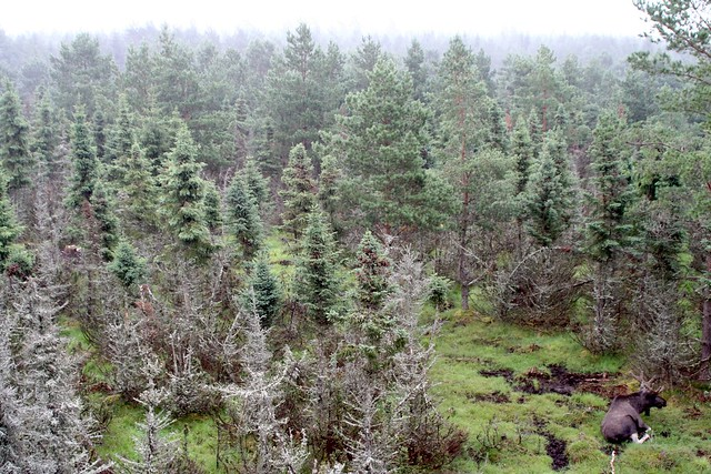 Grönåsens Älgpark, Kosta