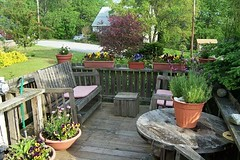 Deck in bloom at Crow Cottage