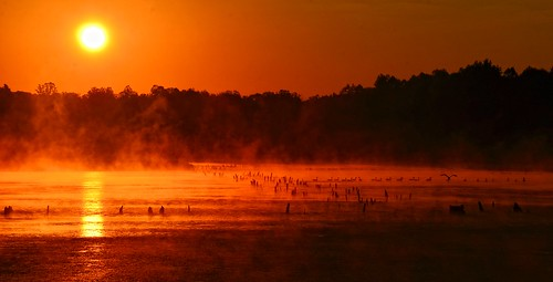 Mist Rises with the Sun at  Muscatatuck NWR