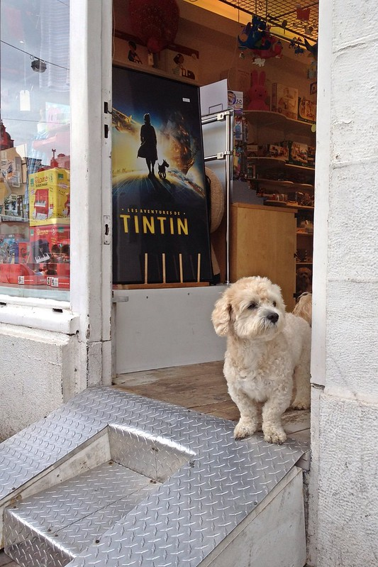 Adventures with Tintin