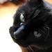 Handsome Cat loves you.