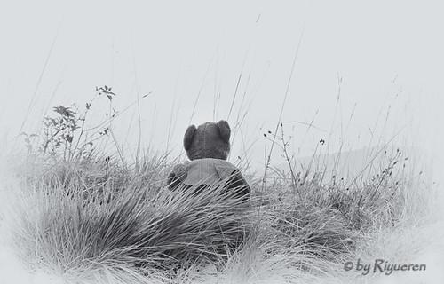 In viaggio con gli orsetti