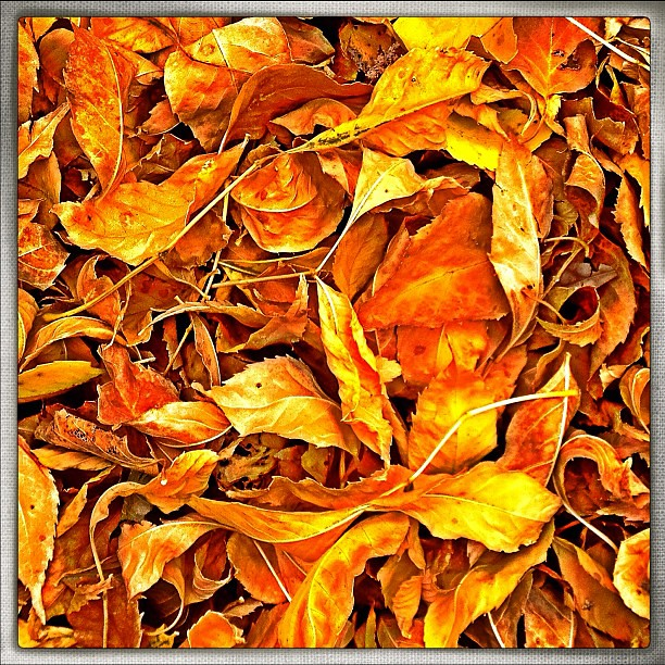 Golden carpet.