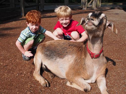 Happy goat.