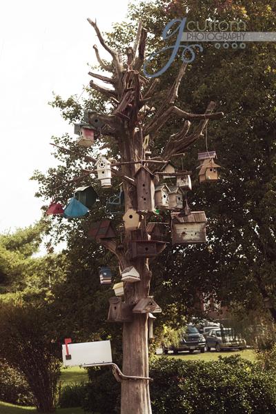 39 - birdhouses