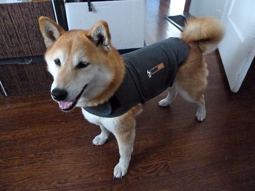 1 October 2012 Bowdu in Thundershirt