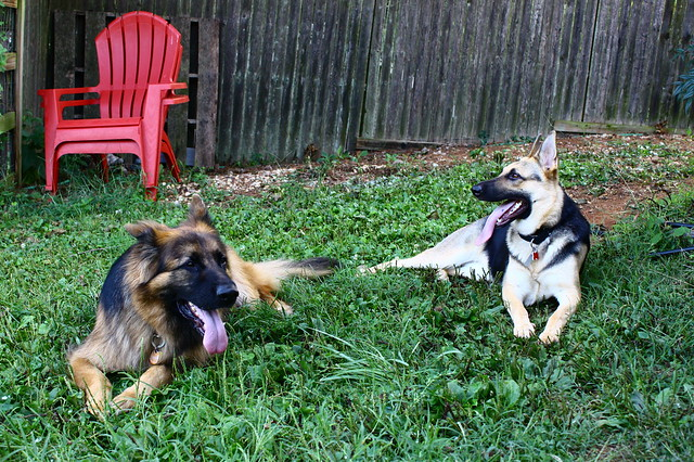 Play-date with Ozzie