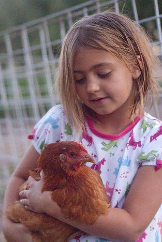 chickenherding-28