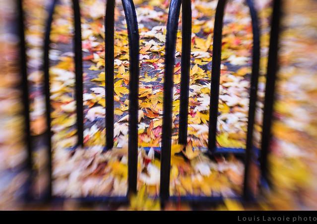 L'automne en folie