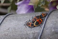 Bug Committee