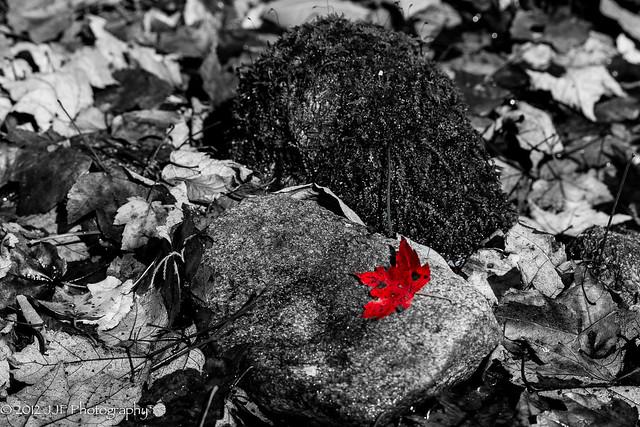 2012_Oct_17_Fall Foliage_031