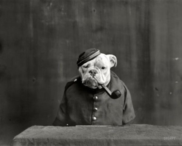 vintage smoking dog