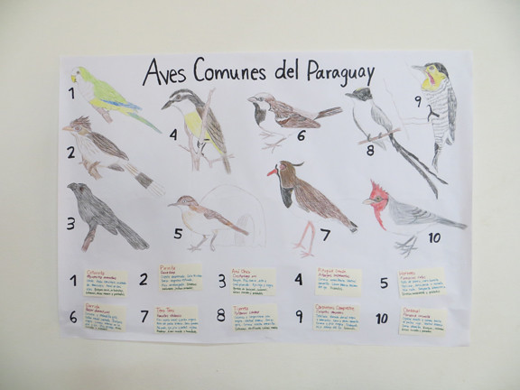 Common birds of Paraguay