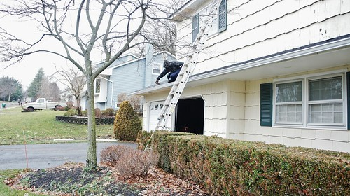 Tree Damage Repairs