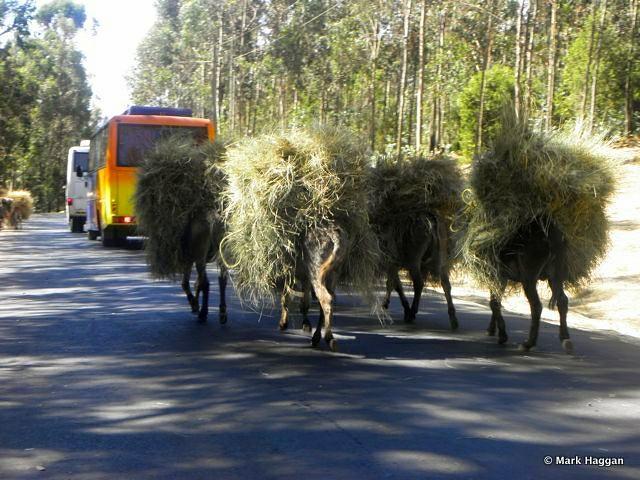 A traffic jam in Ethiopia...