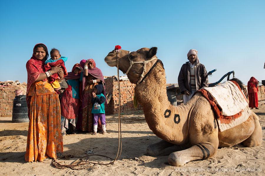 Camel in Brick factory, Rajhastan