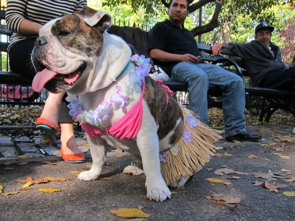 Halloween Dog Parade 2012, Tompkins Square Park: Hula Girl
