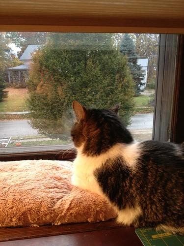 Actually watching the rain