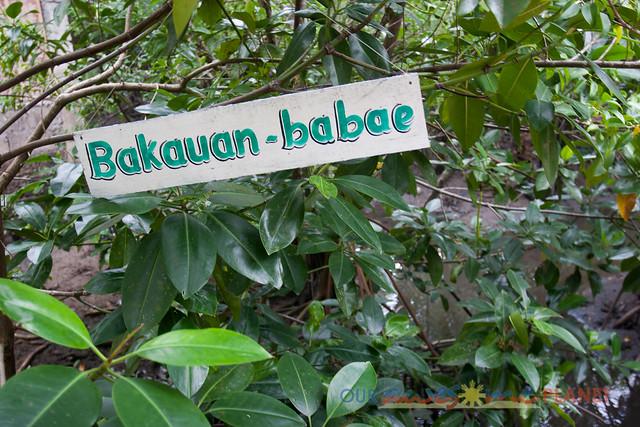 Bakhawan Eco-Park-3.jpg