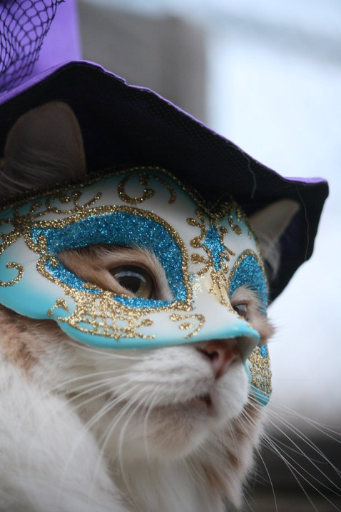The Masked Kitty