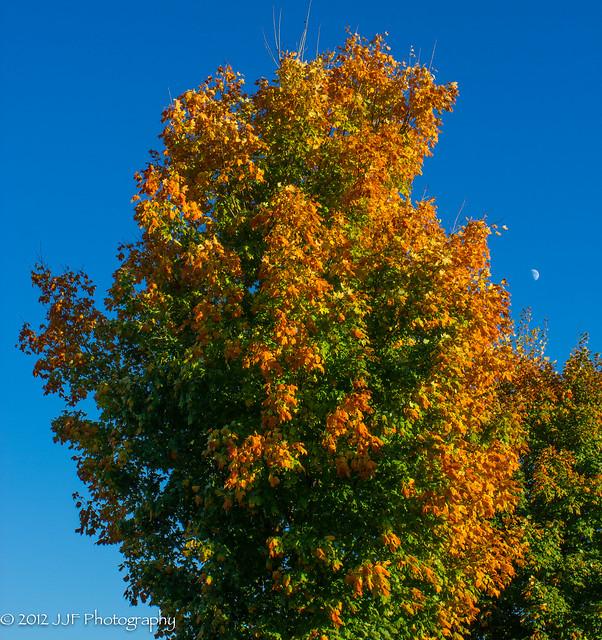 2012_Oct_22_Turning Tree_001
