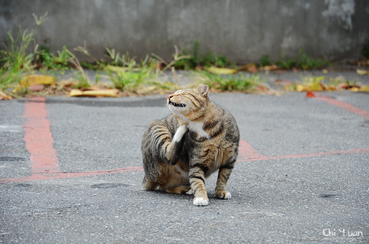 台北淡水貓散步08.jpg